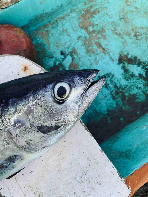Comment saisir du thon