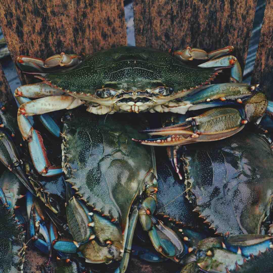 Comment préparer du crabe
