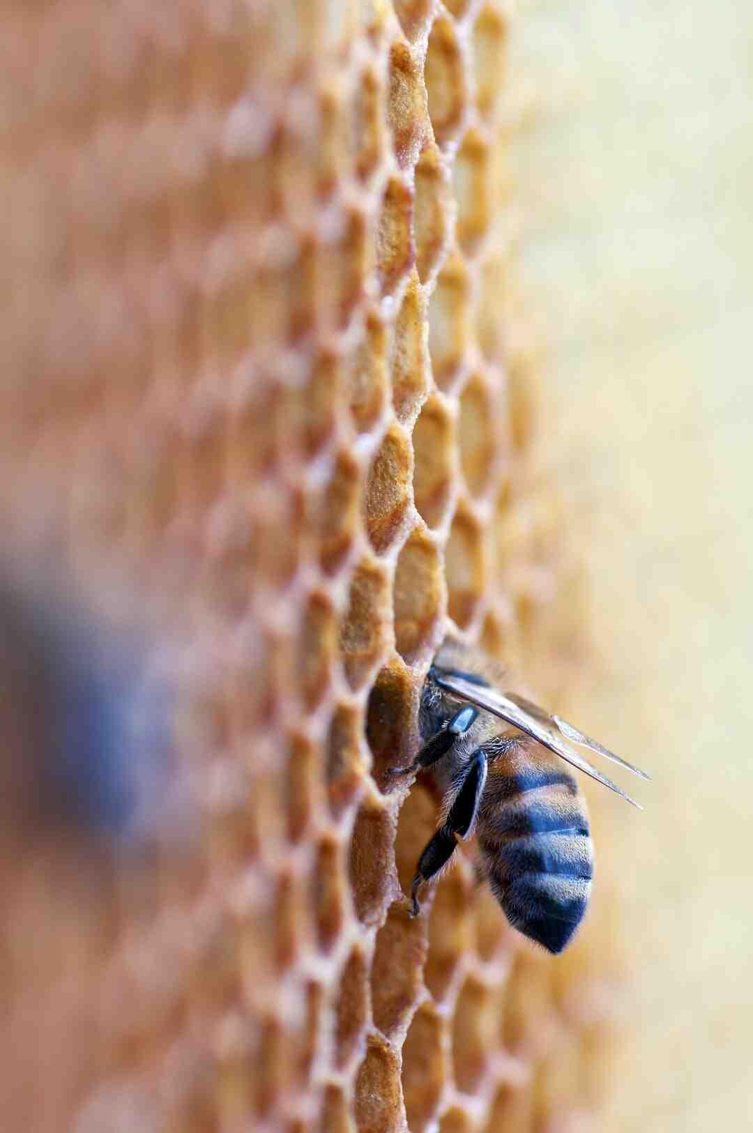 Comment rendre le miel moelleux ?